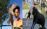 Video: Thót tim vì những pha tấn công con người hung hãn của động vật