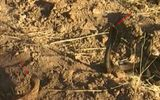 Video: Nhím tấn công rắn hổ mang cứu thằn lằn thoát chết trong gang tấc