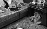 Chủ nhà ngán ngẩm khi nữ sinh thuê trọ sống chung... với rác