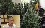 """Hà Nội: """"Vạch mặt"""" nam thanh niên thuê căn hộ chung cư để trồng cần sa"""