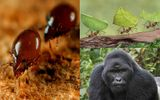 """Clip: Choáng váng với 5 loài động vật """"khỏe nhất quả đất"""""""