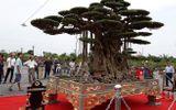"""Video: Đại gia Thái Bình """"chơi sang"""" dát vàng cho chậu cây sanh cổ"""