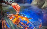 Lĩnh án 18 tháng tù vì đầu độc bể cá cưng của tình cũ để trả thù