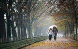 Dự báo mùa đông năm nay ít mưa, nền nhiệt cao hơn mức trung bình 0,5 - 1 độ C