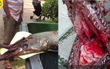 Clip: Kinh hoàng thủy quái nước ngọt tấn công bé gái 9 tuổi