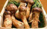 Xếp hàng chờ mua loại nấm đắt đỏ nhất thế giới, về Việt Nam giá 30 triệu đồng/kg