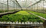 """""""Công nghệ 4.0"""" cơ hội và thách thức cho nông nghiệp Việt Nam"""