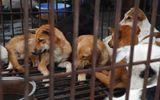 Giới lập pháp Mỹ vận động cấm ăn thịt chó, yêu cầu Trung Quốc nên làm theo