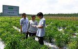 UNIBEN hỗ trợ nông dân thực hiện VietGAP, sản xuất rau an toàn, hướng tới phát triển vùng nguyên liệu sạch