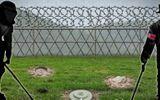 Hàn Quốc và Triều Tiên bắt đầu gỡ mìn tại khu phi quân sự