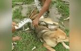 """Video: Thót tim cảnh 3 bé trai túm đầu trăn """"khủng"""", giải cứu chó nhà"""