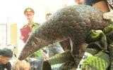 Phát hiện xe tải vận chuyển trái phép 120kg tê tê, rùa hoang dã