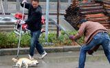 Bị cấm nuôi động vật 15 năm, phạt tù 12 tháng vì liên tục đánh vào mặt chó