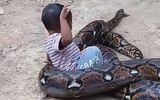 Người mẹ giành lại con trai từ miệng trăn khổng lồ dài 4,2 mét