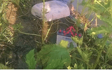 Cà Mau: Dùng điện bẫy chuột ngoài vườn, nam thanh niên bị điện giật tử vong