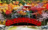 Sôi động và rực rỡ sắc màu Ngày hội văn hóa Nhật Bản tại TP. Phúc Yên