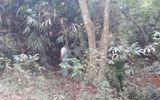 Sư thầy phát hiện chủ tịch xã treo cổ bí ẩn trên cây sầu riêng