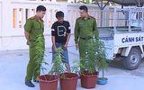 Bắt nam thanh niên tự trồng cần sa tại nhà riêng để lấy lá sử dụng