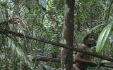 Bộ lạc nguyên thuỷ ở rừng rậm Amazon có nguy cơ biến mất vĩnh viễn vì người hiện đại