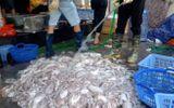 """Vạch trần độc chiêu """"tắm hóa chất"""" hải sản ươn thối thành hàng tươi sống khuynh đảo thị trường"""