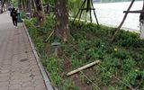 Video: Ngẩn ngơ nhìn vườn hoa rực rỡ quanh hồ Gươm bị san trụi sau đêm giao thừa