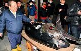 """Đại gia """"bạo tay"""" chi 3,1 triệu USD mua 278 kg cá ngừ, phá vỡ kỷ lục đấu giá tồn tại 6 năm"""