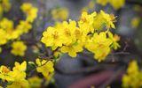 Chơi hoa ngày Tết: Nét đẹp văn hóa dân tộc!