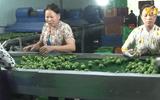 Tăng năng suất và cải thiện chất lượng là bài giải cho nền nông nghiệp phát triển