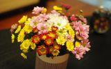 Những loài hoa đẹp và ý nghĩa không phải ai cũng biết trong ngày Tết