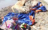 Đi bắt ốc, phát hiện xác cá voi hơn 10 tấn trôi dạt vào vùng biển Bạc Liêu
