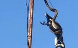 """Video: Rùng mình cảnh trăn """"khủng"""" treo mình trên cột ăng ten siết chết chim"""