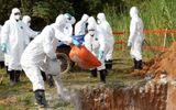 Thái Bình và Hưng Yên họp khẩn phòng chống dịch tả lợn châu Phi