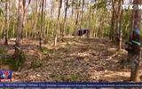 Kẻ gian liên tiếp hủy hoại tài sản của người tố cáo phá rừng