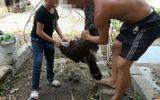 """Vụ 2 anh em Tam Mao nghi làm thịt chim """"quý"""": Vẫn chưa xác định được loài chim """"lạ"""""""