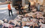 Dịch tả lợn châu Phi lây lan nhanh tại Điện Biên