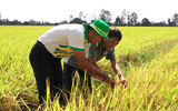 Phân bón Phú Mỹ cùng nhà nông ứng phó thời tiết khắc nghiệt