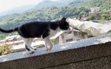 Khám phá Houtong: Ngôi làng mèo nổi tiếng bậc nhất ở Đài Loan