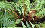 Hàng ngàn người bệnh đã giảm tiểu đêm giúp khỏe thận, phòng ngừa suy thận nhờ loại cây này!