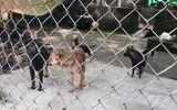 Đàn chó cắn chết bé trai 7 tuổi ở Hưng Yên bị công an bắt giữ