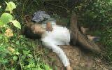Bàng hoàng phát hiện thi thể người đàn ông đang phân hủy bên bờ đê