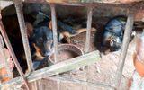 Chủ đàn chó dữ cắn bé trai 7 tuổi tử vong khẳng định không cho đàn chó ăn thịt sống