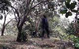 Tá hỏa phát hiện xác người đàn ông phân hủy nặng trong tư thế treo cổ ở vườn điều