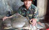 """""""Thủy quái"""" sông Nậm Mộ nặng 22 kg dính câu ngư dân"""