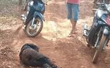 Ráo riết truy bắt nghi can chặn đường, đâm gục vợ cũ trong lô cao su