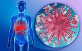 Lần đầu tiên tìm ra hoạt chất điều trị bệnh viêm gan B mạn tính từ cây nhó đông