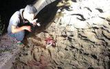 Vụ bé trai 7 tuổi bị đàn chó cắn tử vong ở Hưng Yên: Khởi tố vụ án