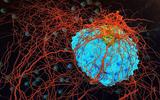 Các nhà khoa học tìm ra bí mật ngăn chặn ung thư di căn