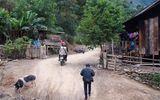 Tin trong nước - Phát hiện ổ dịch tả lợn châu Phi tại xã biên giới Nghệ An