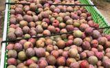 Quyền lợi tiêu dùng - Nông sản Sơn La chinh phục người tiêu dùng Thủ đô