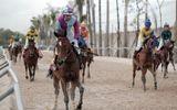 """Tin trong nước - """"Mã sư"""" tiết lộ tuyệt chiêu rèn nài ngựa, bóc mẽ trò đỏ đen trên lưng """"chiến mã"""""""